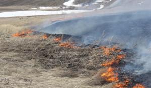 Горит сухая трава. Пожар на поле.