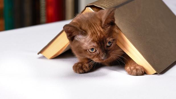 Кот с книжкой