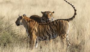 Съемки в национальных природных парках Ботсваны и ЮАР.