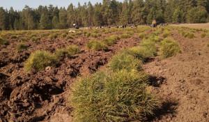Создание новых лесов - 2020