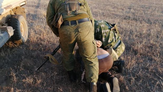 В Алтайском крае задержали злоумышленников, которые пытались вывезти соколов сапсанов.
