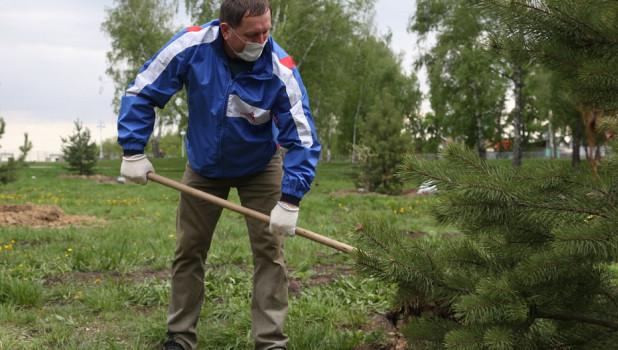 В Нагорном парке высадили молодые деревья и кустарники.