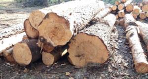Вырубки леса.