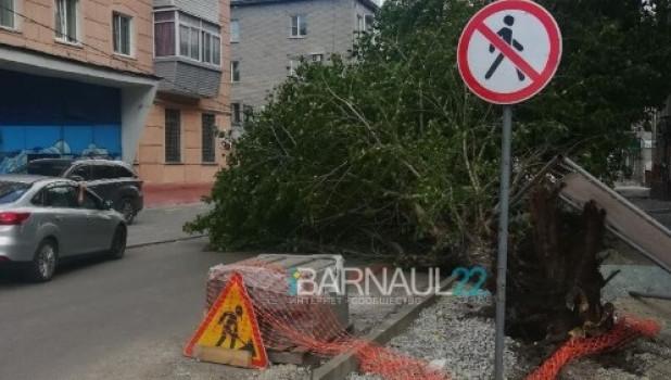 В Барнауле на машину рухнуло дерево.