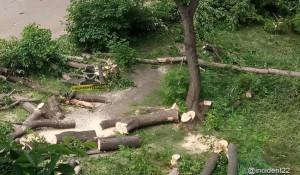 Вырубка парка в Новоалтайске.
