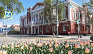 Администрация Барнаула. Тюльпаны.