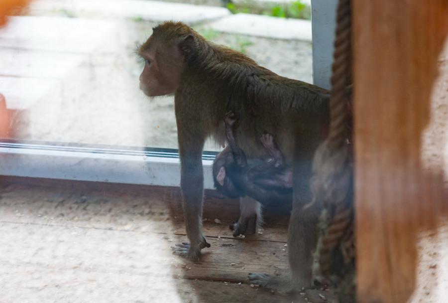 Барнаульский зоопарк вновь открылся для посетителей после снятие режима ограничений.