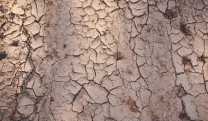 Засуха, поля.