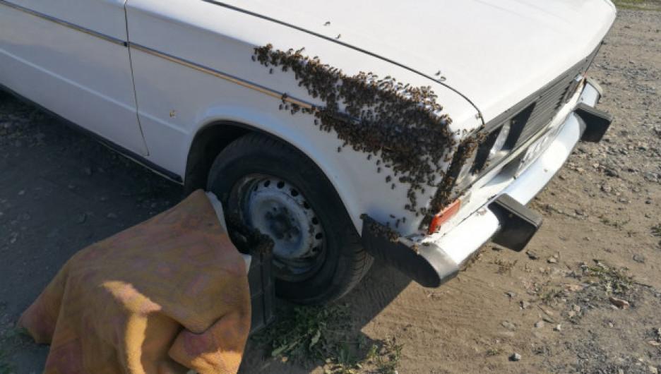 Рой пчел облюбовал припаркованный автомобиль в алтайском городе