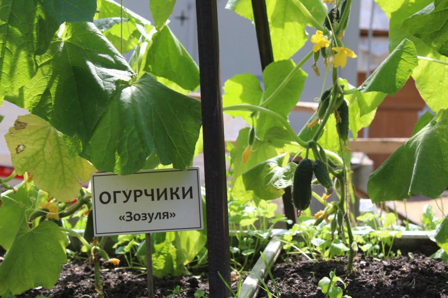 Пресс-тур по кафе и ресторанам Алтайского края в период выхода из пандемии. Июль 2020 года.