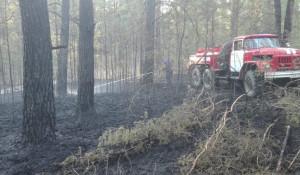 Лесные пожары в Алтайском крае.