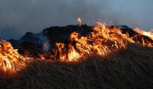 Огонь. Пожар. Горит трава.