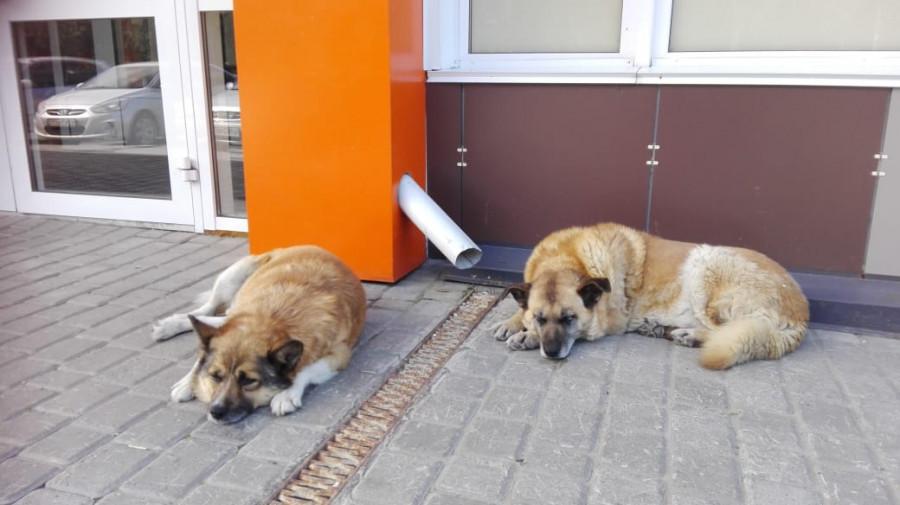 Пальма и Рыжик ждут новых хозяев на Павловском тракте, 291.