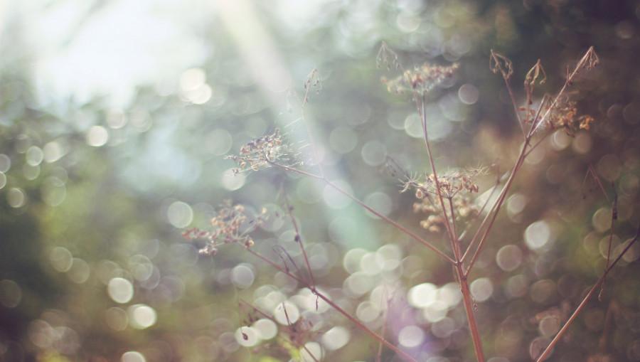 Осень. Солнце.