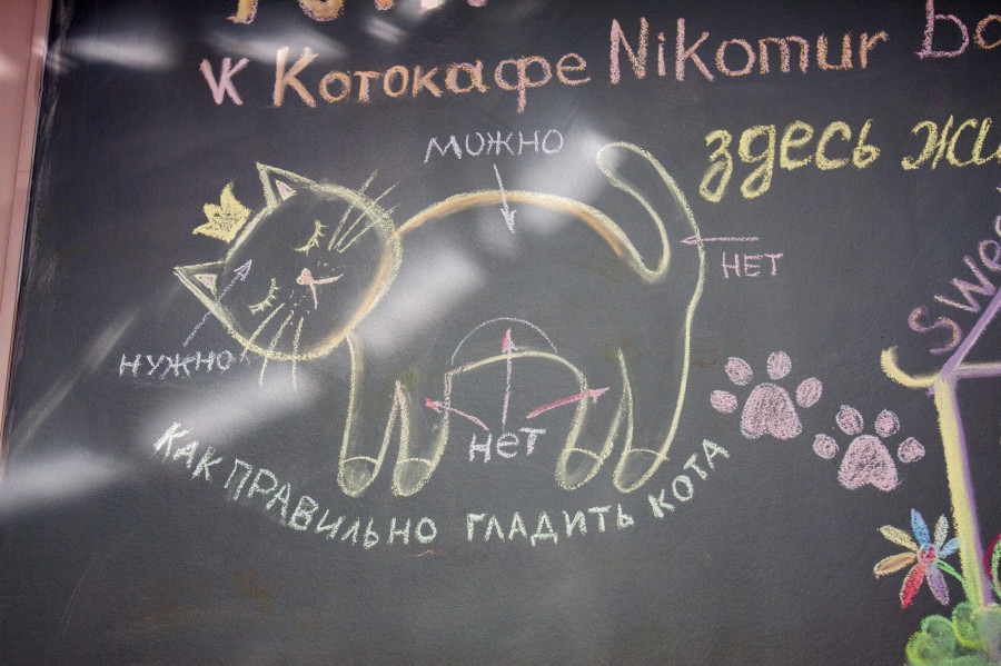 Котокафе Nikomur.