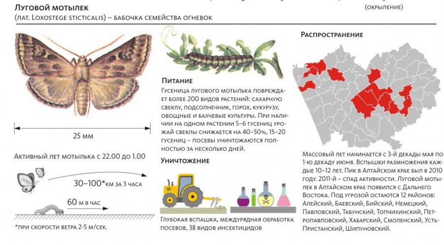 Инфографика: луговой мотылек.
