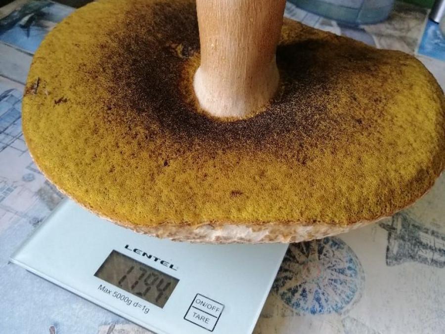 Урожай грибов. Фото из соцсетей.