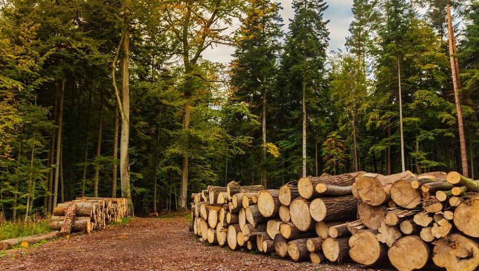 Лес. Заготовка древесины.