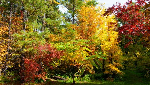Осень в барнаульском дендрарии.