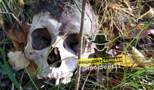 Человеческий череп в лесу.