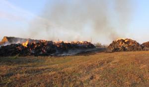 Школьники в Алтайском крае сожгли сено на миллион рублей.