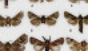 Энтомологи назвали новые виды бабочек великими русскими именами.