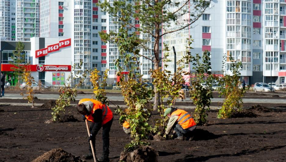 Озеленение сквера на улице Ускова в Барнауле.
