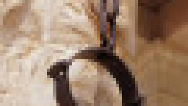 Орудия пыток, Средневековье