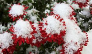 Снег в Барнауле.