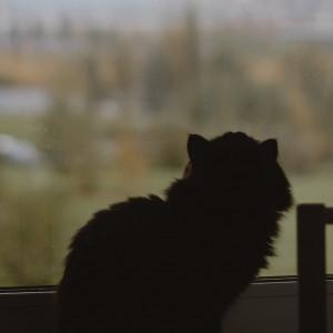 Кот на окне. Осень.