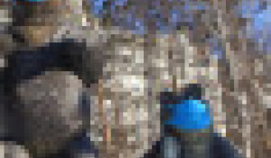 Медведи в масках.