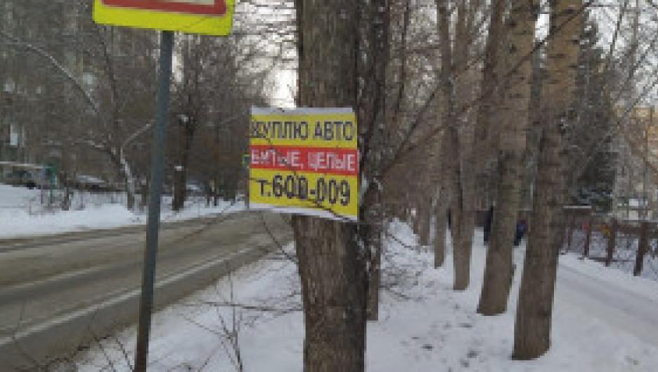 К деревьям вдоль дорог Барнаула варварски прибивают объявления о покупке автомобилей.