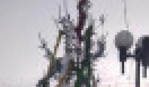 Новогодняя елка. Омская область.