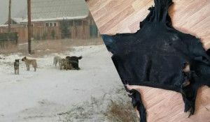 Собаки напали на девушку и разорвали всю одежду. Улан-Удэ.
