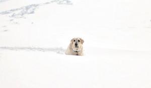 Мороз, снег. Собака.