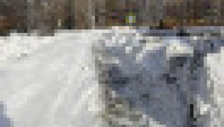 Трактор повредил кусты калины на ул. Шукшина в Барнауле.