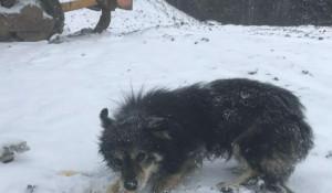 Собаки стали бездомными после сноса кафе. Красноярск.