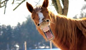 Смешной конь.
