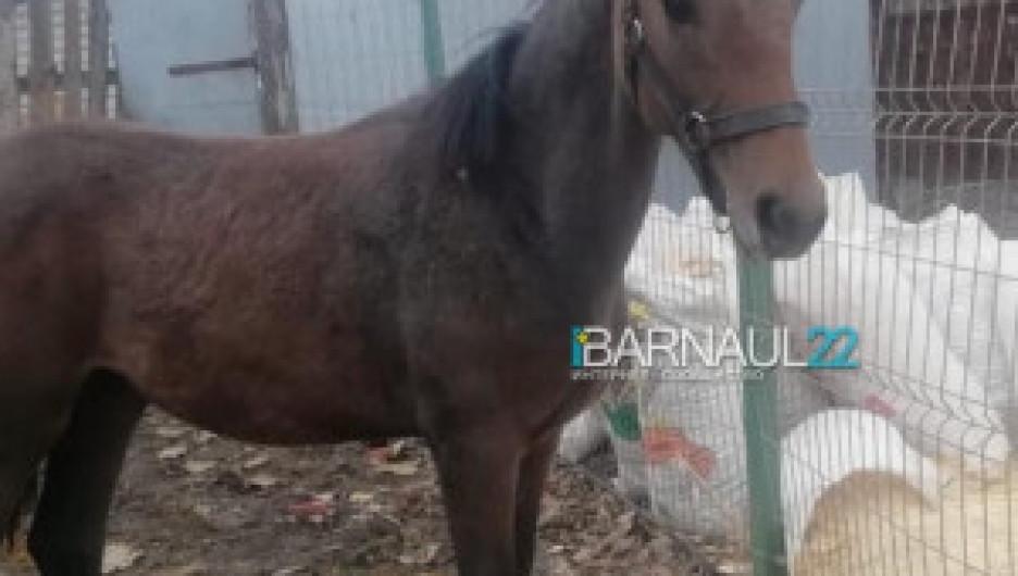 Лошадь, содержавшаяся в приюте.
