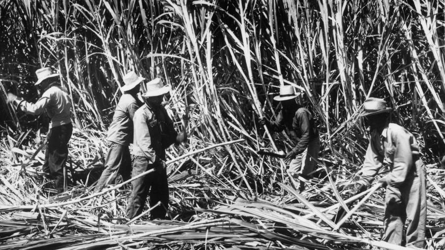 Гавайская плантация.