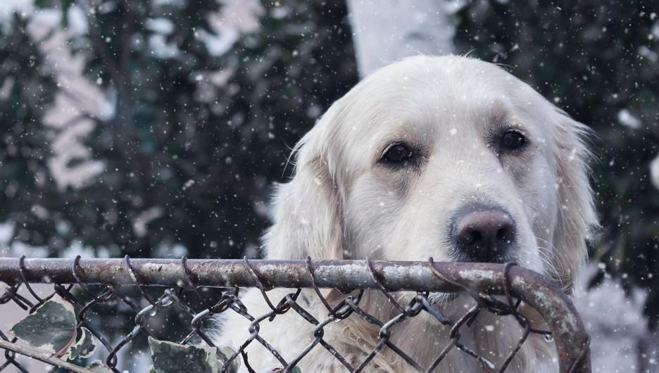 Собака. Приют.