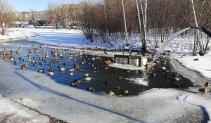Пруд с уточками в парке Горького.