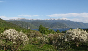 Яблоневый сад в Яйлю.