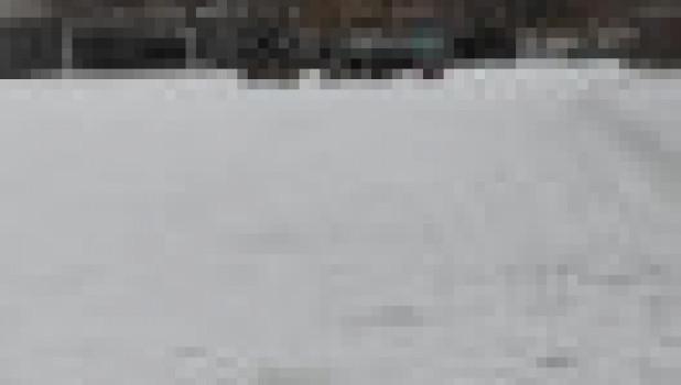 Собаки у барнаульской школы №126.