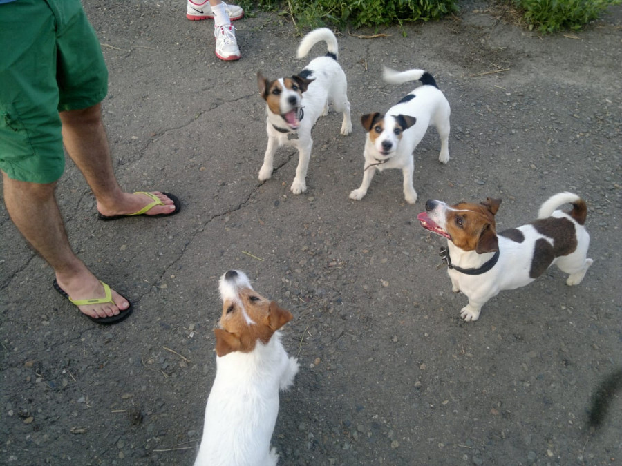 Собаки, гуляющие с хозяевами в Мизюлинской роще.