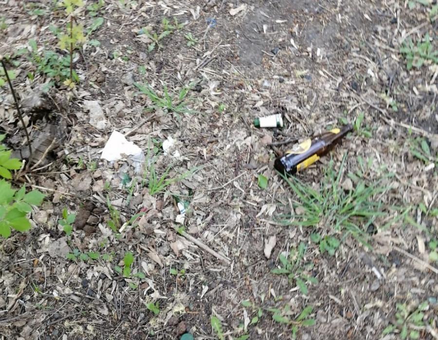 Во время прогулок собаководы убирают мусор в роще.