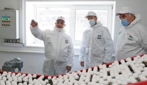 Виктор Томенко обсудил вопросы ценообразования на пищевое яйцо.