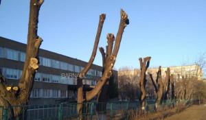 Обрезка деревьев в Барнауле.