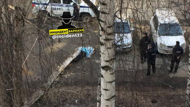 В Барнауле на человека рухнуло дерево.