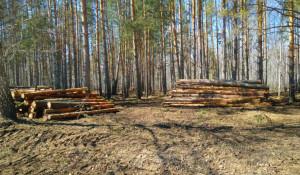 Караканский бор. Вырубка леса.
